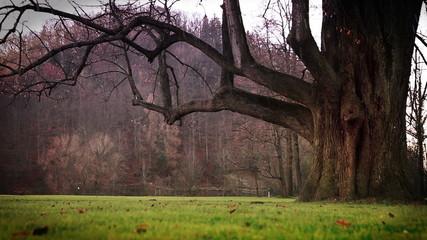 Raining weather, Mystic tree  and  green grass