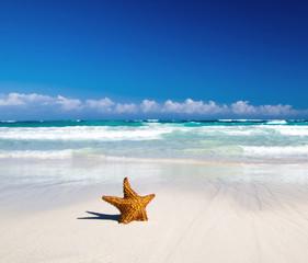 starfish with beach