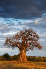 African landscape 2