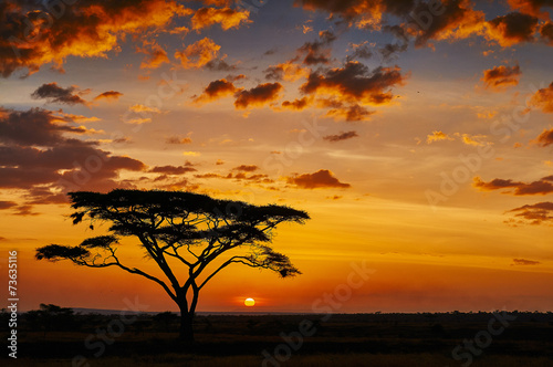 In de dag Afrika African sunset