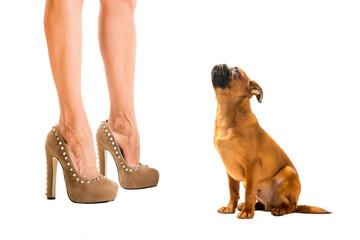 heels and dog