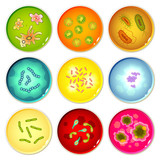 Petri dishes with bacterial colonies
