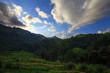 Landscape,Tea plantation in the Doi Ang Khang ,ChiangMai Thailan