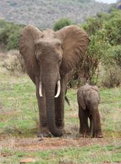 Eleantenmutter mit Kind