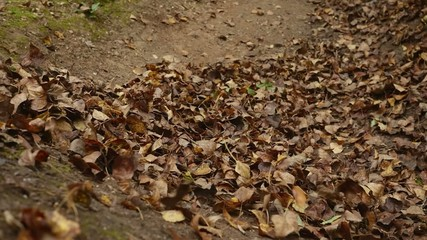 Leaves flying away after moutain bicycle rides through in slow