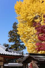 奈良公園 手向山八幡宮