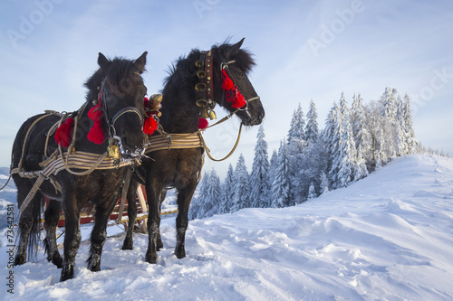 canvas print picture Team of horses