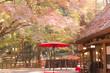 奈良公園 - 73642725