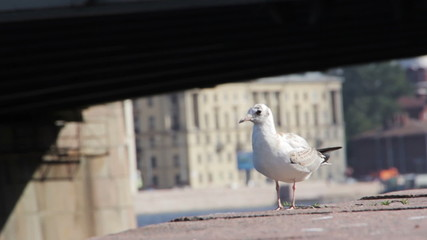 Gulls on the waterfront