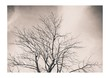 canvas print picture - Der Baum