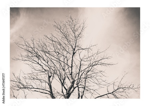 canvas print picture Der Baum