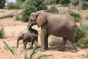 Elefantenmuter mit Kind