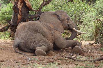 liegender Elefant
