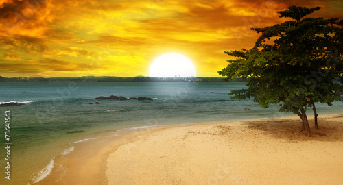 sea beach, a tree and a fantastic sunset - 73648563
