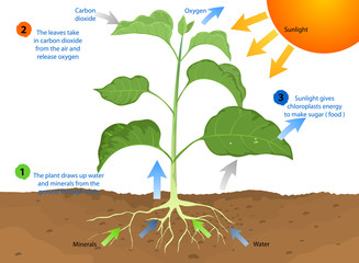 Photosynthesis,plant and nature background