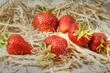 frische Erdbeeen im Stroh