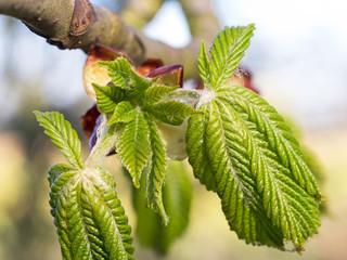 Frühling - jahreszeit - Frühlingsanfang -  Frühlingsbeginn -