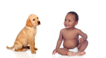 African baby and labrador puppy