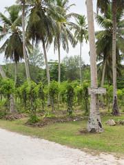 plantation of vanilla