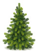 Detailed Christmas Tree - 73654765