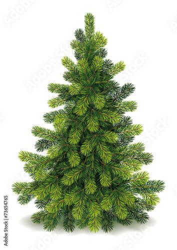 Fototapeta Detailed Christmas Tree
