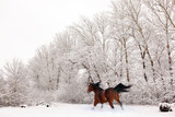 Galloping horse under a heavy snowfall