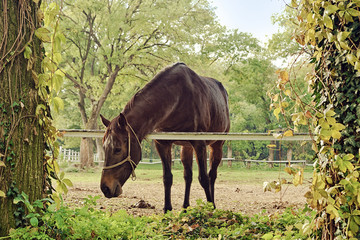Beautiful Chestnut Brown Horse Mare on the Farm