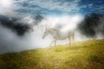 weisses Pferd auf einer Bergalm...