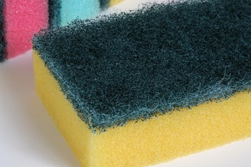 Sponge scourers © Arena Photo UK