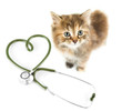 Cat from above on white. Veterinary for pets concept. - 73659761