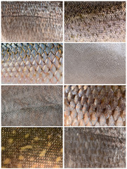 collection of fish scales