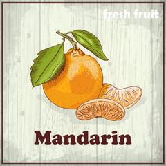Vintage hand drawing illustration of Mandarin