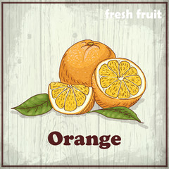 Vintage hand drawing illustration of orange