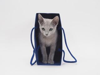 青い手さげ袋に入ったロシアンブルーの子猫