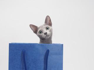 青い手さげ袋から顔を出したロシアンブルー