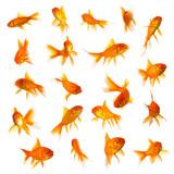 Goldfish set collage