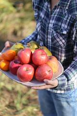 秋のフルーツ盛り合わせ