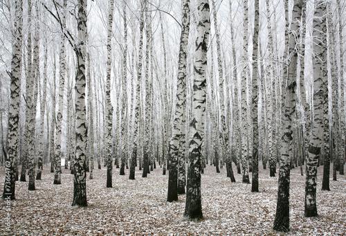 Panel Szklany Winter birches in autumn