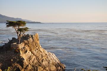 lone cypress 17 mile drive USA