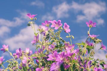 Flowers against blue sky