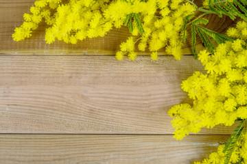 cornice di mimosa