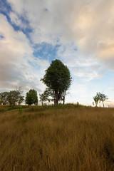 Big tree on the hills