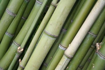 legno verde di bambù