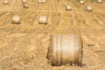 Hay-Roll On Meadow After Harvest On Summer End Landscape