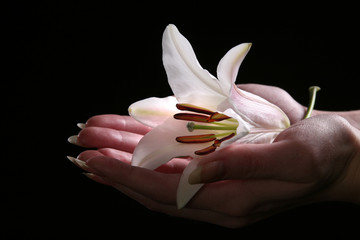 delicate white lily flower