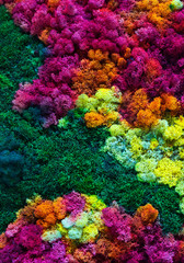 Nature colorful background