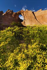 Window rock in Arizona, USA