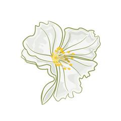 Jasmine flower vector
