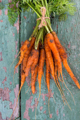 freshly picked carrots on wooden surface