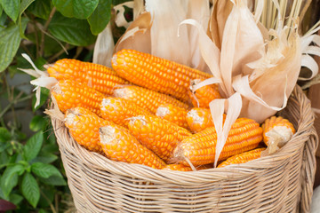 corns in rattan basket